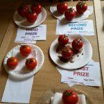 Members Tomatoes - 2014