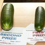 Class 8 Cucumbers