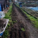THE SOIL WILL BE USED ON SITE TO FILL THE RAISED BEDS