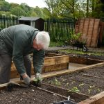Planting in the Raised Bed