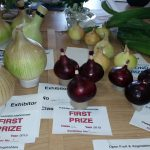 Open Onion from Seed & Onion from  Sets 2015