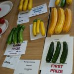 Courgettes 2015