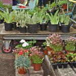 Plant Stall - Cedar Avenue