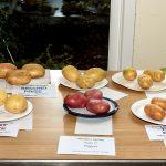 Class 17 Potatoes