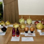 Class 13 Onions from Seed