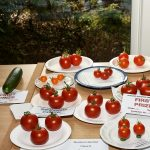 Class 9 Tomatoes