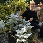 """CHRON Mrs Redhead with """"Angel Wings"""" a striking foliage plant in her prize-winning garden"""